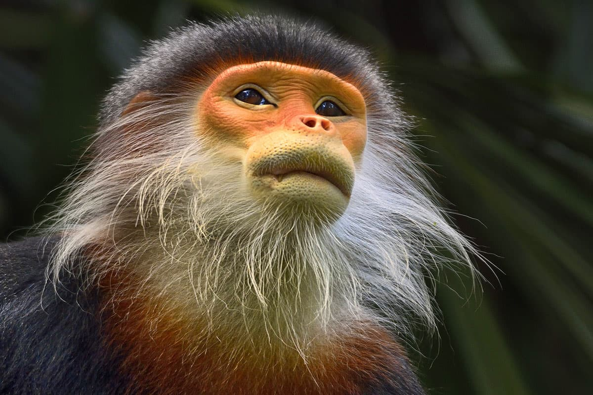beard monkey photo - 1